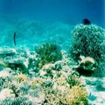 corallo2